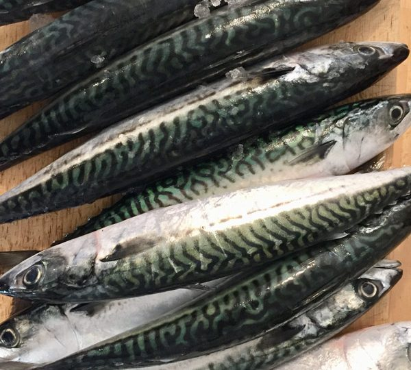 Is Fish Good For Pregnant Women?